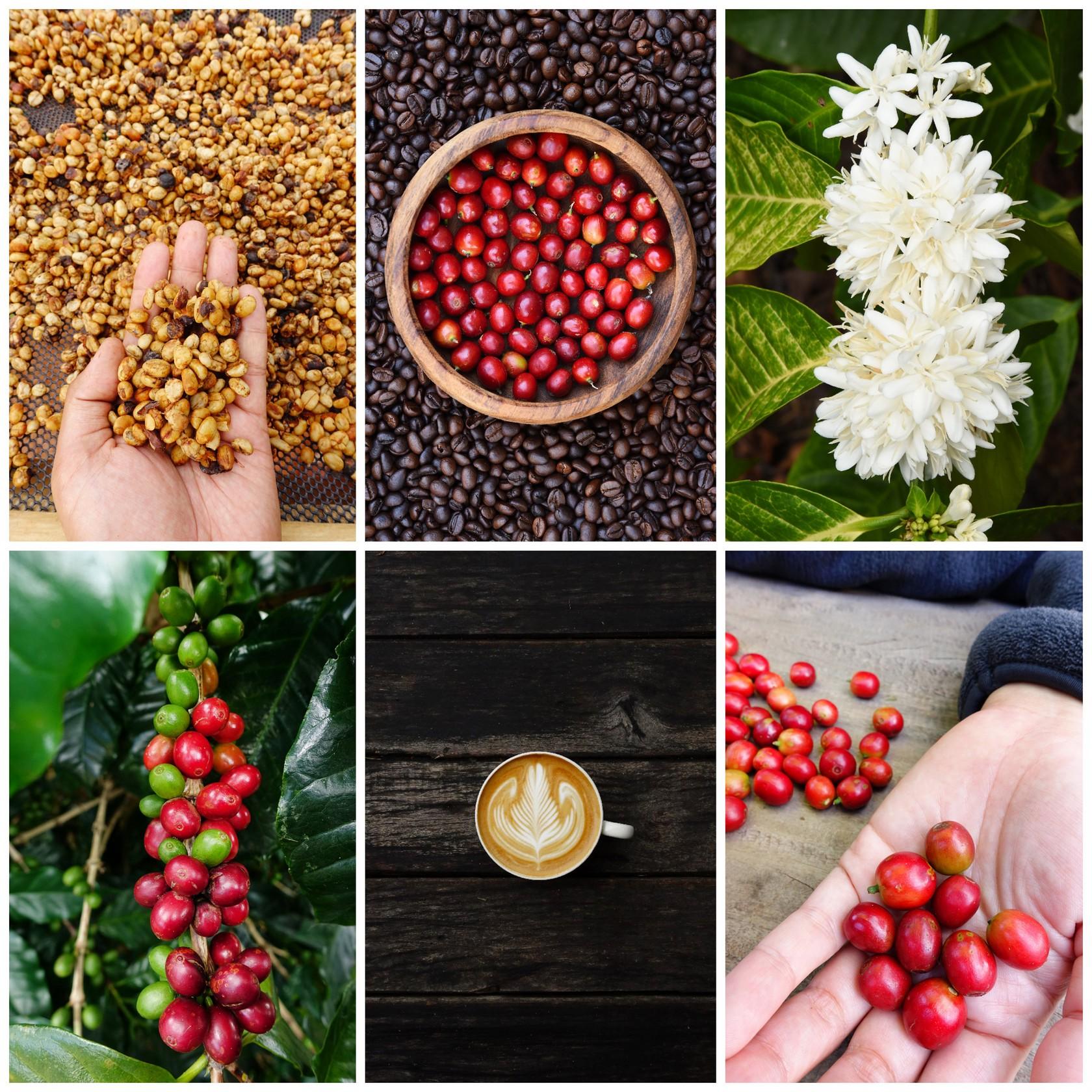 Celebrate Coffee in San Francisco Bay Area